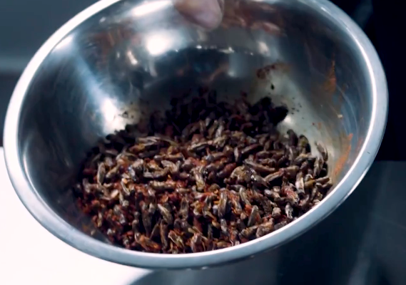 World Hunger, How Crickets Can Help